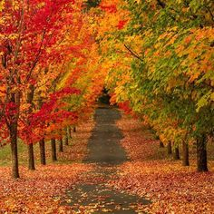 Beautiful signs of Fall here at Forsythe Road in Oregon City