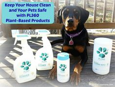 Check out our #review of @pl360pet Pet-Safe #cleaningproducts and enter to win (link in profile) - 3 winners will receive all 4 great #petsafecleaningproducts  #petgiveaway #doggiveaway #pl360 #petsafe #nontoxic #springcleaning #nontoxiccleaning #dogstagram #puppylove #dogblogger #dogmom #ilovemydogs #dobermanpuppy #dobiemix #rescueddogsofinstagram #puppiesofinstagram #adoptdontshop #dogsofinstagram by lapdogcreations