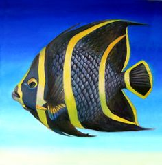 """""""French Striped Angelfish"""" by Nancy Tilles: Buy prints, posters, canvas and framed wall art directly from thousands of independent working artists at Pretty Fish, Beautiful Fish, Colorful Fish, Tropical Fish, Beautiful Sea Creatures, Sea Life Art, Cartoon Fish, Salt Water Fish, Fish Drawings"""