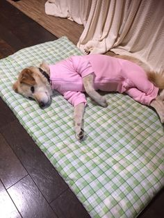 新しいパジャマ買ってもらったんだぁ。