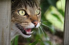 Cat       cat  Posted by © Agnes PERROT  on 2013-09-16 16:50:13      Tagged:  , cat , cats  - http://newsyork.gq/cat-16/
