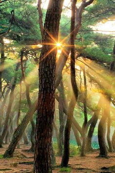 Ray of Light  by SEO