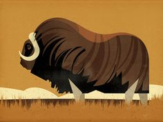 Musk Ox  by Dieter Braun