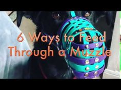 How to feed a dog through a muzzle! Aggressive Dog, Stress, Dogs, Free, Pet Dogs, Doggies, Psychological Stress