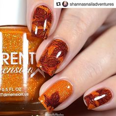 Lovely leaves? Check! Fall weather? Double check! Love this stamped mani by the creative  @shannasnailadventures ・・・ Added some fall leaves to 'And All I Loved, I Loved Alone' by @differentdimensionus - A orange jelly with holographic microflakies. This is 2 coats. These are from the 'Poe Halloween Collection' which is releasing on Sept 23rd at 9pm EDT. The stamping is using one of my fave fall plates, @uberchicbeauty 'Lovely Leaves plate!!#prsample