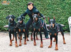 List of doberman movies. Famous dobermans from tv and movies.