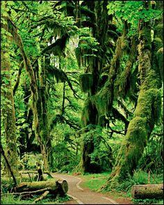 An amazing place to visit. Ferns as tal… Olympic Rain Forest, Washington State. An amazing place to visit. Ferns as tall as a person! An amazing place to visit. Cool Places To Visit, Places To Travel, Evergreen State, All Nature, Le Far West, Fauna, Image Hd, Travel Usa, Beach Travel
