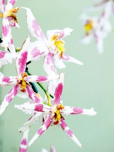 More orchids / Flickr - Photo Sharing! on imgfave