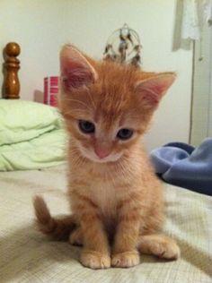 Why so sad, kitty? WHY? Someone snuggle him right now!!   Photo viaImgur