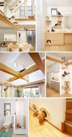 catwalk ikea katze pinterest katzen katzen. Black Bedroom Furniture Sets. Home Design Ideas