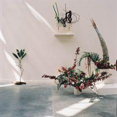 Est-il possible d'être révolutionnaire et d'aimer les fleurs ? Camille Henrot