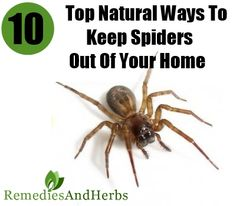 Home Remedies, Kitchen Remedies and Herbs - http://www.remediesandherbs.com/top-10-natural-ways-to-keep-spiders-out-of-your-home/