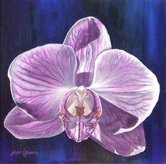 orchid paintings | Orchid I Painting - Orchid I Fine Art Print
