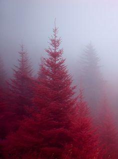 So beautiful...love the fog.