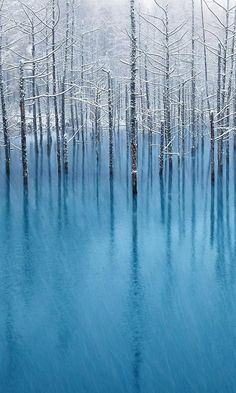 Frozen Trees | Smart Phone Wallpaper and Lock Screens