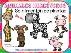 Tipos de animales claseficación (6) Teaching Time, Teaching Activities, Teaching Science, Science For Kids, Classroom Activities, Science Ideas, First Grade Science, Animal Science, Colouring Pics