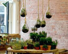 Get 21 hanging glass terrarium ideas to decorate your home and pursue your small gardening. Learn how to setup a hanging glass terrarium to decorate your room. Terrarium Workshop, Build A Terrarium, Large Terrarium, Hanging Glass Terrarium, Terrarium Containers, How To Make Terrariums, Moss Terrarium, Terrarium Plants, Glass Containers