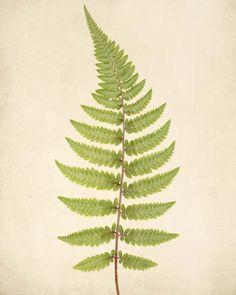 "Fern Art, Botanical Print ""Fern No. 4"" (Rocky Top Studio)"