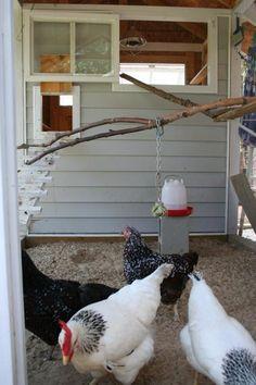 Kichohana's Chicken Coop