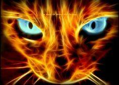 Fire cat.