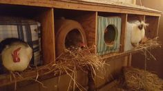 Keeping the chickens warm in the chicken coop  with cat boxes! Every  spot was occupied. I also strung Christmas lights around on the inside for that little extra warmth. They love it and I get lots of eggs in the winter.....happy chickens lay lots of eggs lol