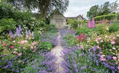 Wollerton Old Hall Garden @Wollerton Rose Garden, Nepeta and Path http://www.pinterest.com/pin/96968198202598973/…