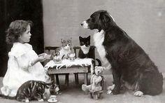 petite fille prenant le thé avec ses animaux