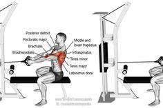 Straight back seated cable row. A major compound pulling exercise! Target muscle: None. Multiple back shoulder and arm muscles act synergistically. Synergistic muscles: Middle and Lower Trapezius Rhomboids Latissimus Dorsi Teres Major Posterior Delt Good Back Workouts, Chest Workouts, Back Exercises, Gym Workouts, Training Exercises, Face Pull Exercise, Weight Training, Weight Lifting, Cable Workout
