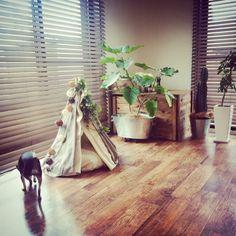 katsuwobushiさんの、リビング,ダイソー,ペット,ハンドメイド,DIY,ウッドブラインド,イヌ,ティピーテント,インドアグリーン,ペットインテリア,NO GREEN NO LIFE,ペットベッド,ペットと暮らす家,塩系インテリアの会,のお部屋写真