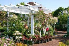 De Pergola van het Centrum van de tuin Royalty-vrije Stock Afbeeldingen