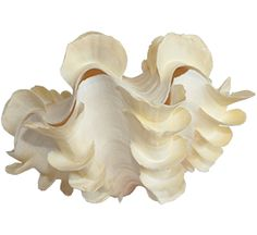 Seashells, Animal, Photos, Inspiration, Objects, Sea Shells, Characters, Shelled, Pictures