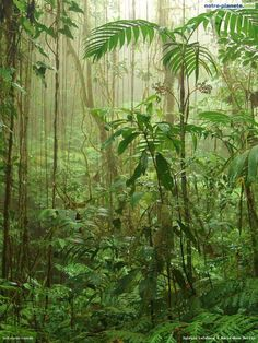 forêt pluviale tropicale - http://www.facebook.com/contreladeforestation
