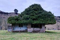 Old house, Manawatu - Whanganui, New Zealand