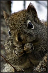 so many whiskers for a baby squirrel