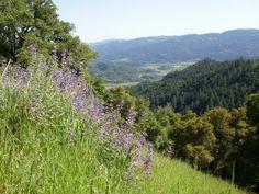 Bothe Napa Valley State Park   Explore #MyStHelena at StHelena.com