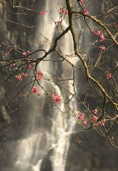 beautiful blossoms in front of waterfall Belle Image Nature, Beautiful World, Beautiful Places, Nature Wallpaper, Amazing Nature, Belle Photo, Pretty Pictures, Beautiful Flowers, Nature Photography