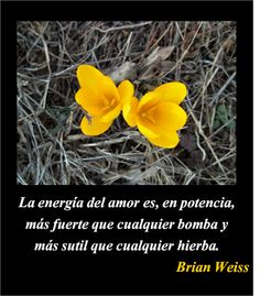 45 Best Brian Weiss Images Dr Brian Weiss Past Life