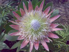 cactus flowers pictures | Cactus Flower - bit-tech.net Forums