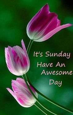 Have a Great Sunday!