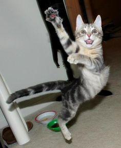 Dance like an Egyptian
