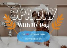How To Create A Spa Day With Your Dog - take it from the dreaded 'bath' to a spa day, we share how we do it!