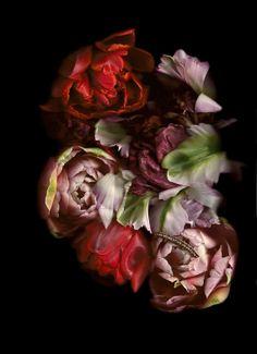 Fotografie: Annet van der Voort • Blumen & Pflanzen Blog • 99Roots.com