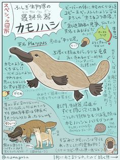 Animals And Pets, Funny Animals, Cute Animals, Japanese Animals, Animal Graphic, Platypus, Australian Animals, Thing 1, Animal 2