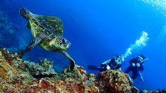 Plongée à Okinawa