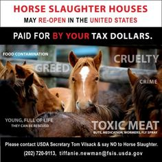 SPEAK UP!  Tell Congress to Ban Horse Slaughter Once and for All! Please Support the Safeguard American Food Exports (SAFE) Act (S. 541/H.R. 1094)    As several states (New Mexico, Oklahoma, etc.) move closer to opening horse slaughter plants on U.S. soil for the first time in six years, federal legislation to ban the horrific practice of horse slaughter is needed NOW!   PLZ Sign & Share!