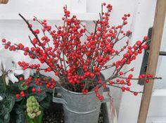 grene jul - Google Search Scandi Christmas Decorations, Plants, Google Search, Plant, Planets