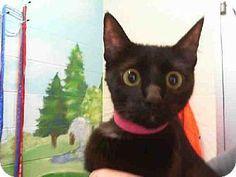 Grand Prairie, TX - Domestic Mediumhair. Meet MEG, a cat for adoption. http://www.adoptapet.com/pet/11192397-grand-prairie-texas-cat -- Shelter: Grand Prairie Animal Services Pet ID #: 7278708-A123839 Phone: (972) 237-8575 E-mail: animaldispatch@gptx.org Website: http://www.gptx.org/paws Address: 2222 W. Warrior Trail Prairie Paws Adoption Center Grand Prairie, TX 75052