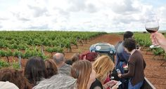 Entre Viñedos y Olivares - IV Primavera Enogastronómica 2016 - Ruta del Vino Ribera del Guadiana - Paseo en remolque por los viñedos de Palacio Quemado