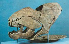 Dunkleosteus skull: