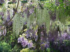Claude Monet's garden